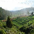 Panoramic photos of the Nilgiri Hills in Kerala, India., Kochi India