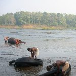 Three elephants are getting a bath in the river.