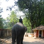 Elephant ride in Cochin, India.