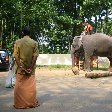 Ready for an elephant ride in Kerala.