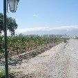 Photos of the Mendoza wine region in Argentina