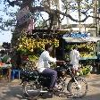 Market stand and bananas in Mahabalipuram, India