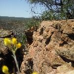 Yellow wildflowers in Kalbarri National Park