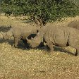 Photos of Rhino in Etosha National Park, Namibia