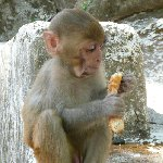 Pictures of the Monkey Temple in Katmundu, Myanmar