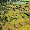 Paro Bhutan Ricefields in Bhutan
