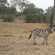 Photo of a zebra in Kafue National Park Wildlife Pictures, Zambia