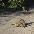 Photos of baboons playing around