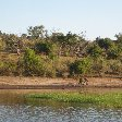 Safari Tours Moremi Wildife Reserve and Chobe National Park, Botswana