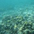Marine Life in Tonga, Nuku'alofa Tonga