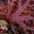 Scuba diving, Honiara, Solomon Islands