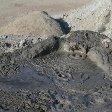 Mud vulcano in Gobustan, Azerbaijan