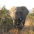 Photos of an elephant in the Mkhaya Game Reserve, Swaziland