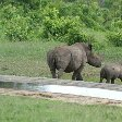Pictures of a baby rhino in the Mkhaya Game Reserve, Swaziland, Magomba Swaziland