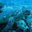 Close up photos of a turtle at Palau Island