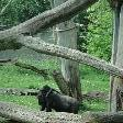 Pictures of the Arnhem Zoo Holland Netherlands Picture Sharing Pictures of the Arnhem Zoo Holland