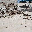 All Inclusive Honeymoon in Aruba Oranjestad Holiday Sharing