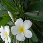 Samoa trip from Upolu to Savaii island Apia Trip Review