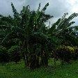 Samoa trip from Upolu to Savaii island Apia Blog Picture