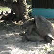 Victoria Seychelles Trip Sharing