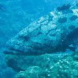 Swimming with Whale Sharks in Mozambique Tofo Album Sharing