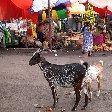 Moroni Comoros