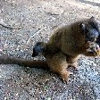 Wildlife pictures Mayotte Island Mamoudzou Blog Photos