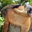 Wildlife pictures Mayotte Island Mamoudzou Vacation Diary Wildlife pictures Mayotte Island