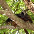 Wildlife pictures Mayotte Island Mamoudzou Picture Wildlife pictures Mayotte Island