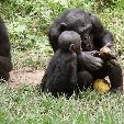 Lola Ya Bonobo sanctuary near Kinshasa Democratic Republic of the Congo Photo Sharing Lola Ya Bonobo sanctuary near Kinshasa