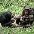 Lola Ya Bonobo sanctuary near Kinshasa Democratic Republic of the Congo Trip Adventure Lola Ya Bonobo sanctuary near Kinshasa