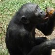 Lola Ya Bonobo sanctuary near Kinshasa Democratic Republic of the Congo Vacation Experience