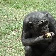 Lola Ya Bonobo sanctuary near Kinshasa Democratic Republic of the Congo Travel Gallery Lola Ya Bonobo sanctuary near Kinshasa