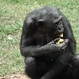 Lola Ya Bonobo sanctuary near Kinshasa Democratic Republic of the Congo Travel Experience