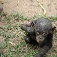Lola Ya Bonobo sanctuary near Kinshasa Democratic Republic of the Congo Travel Diary Lola Ya Bonobo sanctuary near Kinshasa