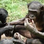 Lola Ya Bonobo sanctuary near Kinshasa Democratic Republic of the Congo Trip Sharing
