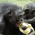 Lola Ya Bonobo sanctuary near Kinshasa Democratic Republic of the Congo Blog Adventure