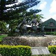 Norfolk Island pine tree tours Kingston Travel Album