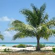 Kiribati Island pictures Bairiki Travel Diary