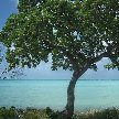 Kiribati Island pictures Bairiki Review Gallery