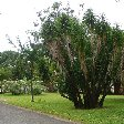 Roseau Dominica Botanical Gardens Vacation Guide