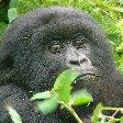 Ruhengeri Rwanda Holiday Review