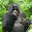 Rwanda Volcanoes National Park Ruhengeri Pictures