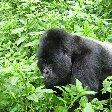 Rwanda Volcanoes National Park Ruhengeri Travel Picture