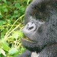 Rwanda Volcanoes National Park Ruhengeri Trip Guide