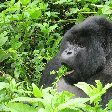 Rwanda Volcanoes National Park Ruhengeri Holiday Tips Rwanda Volcanoes National Park