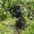 Rwanda Volcanoes National Park Ruhengeri Trip Photographs Rwanda Volcanoes National Park