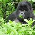 Rwanda Volcanoes National Park Ruhengeri Holiday Experience Rwanda Volcanoes National Park