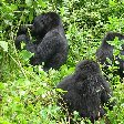 Rwanda Volcanoes National Park Ruhengeri Diary Picture Rwanda Volcanoes National Park