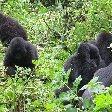 Rwanda Volcanoes National Park Ruhengeri Photos